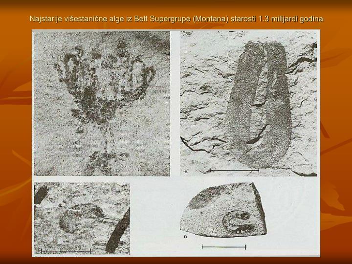 Najstarije višestanične alge iz Belt Supergrupe (Montana) starosti 1.3 milijardi godina