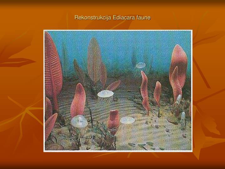 Rekonstrukcija Ediacara faune