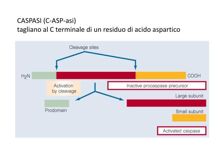CASPASI (C-ASP-asi)