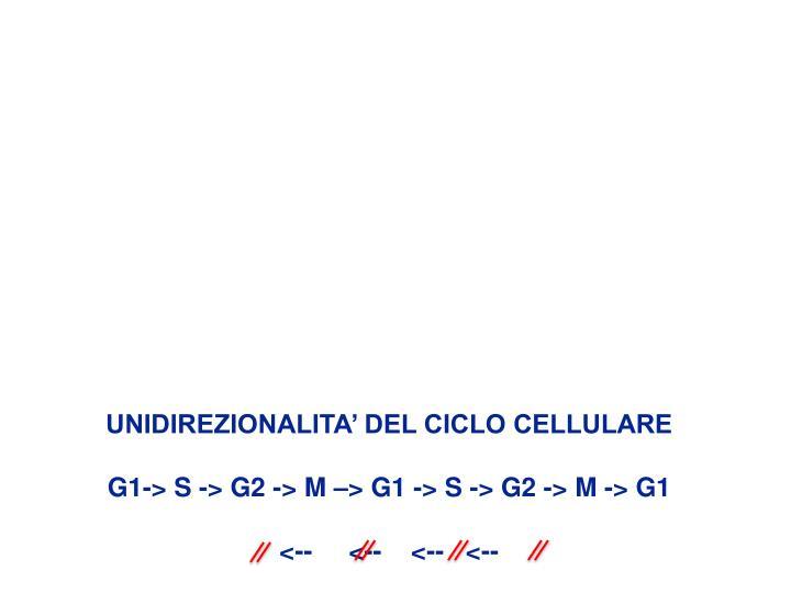 UNIDIREZIONALITA' DEL CICLO CELLULARE