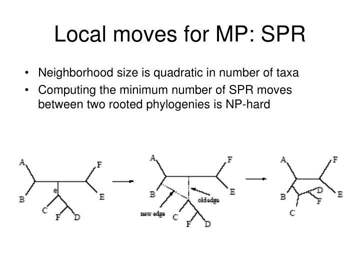 Neighborhood size is quadratic in number of taxa