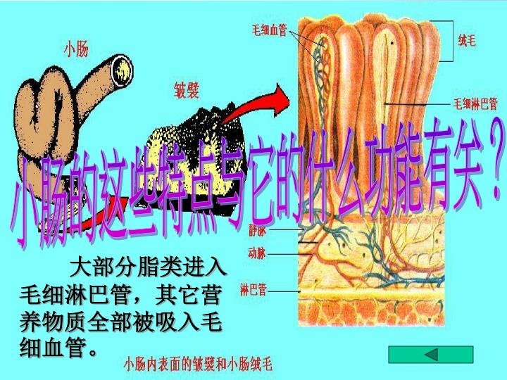 小肠的这些特点与它的什么功能有关?