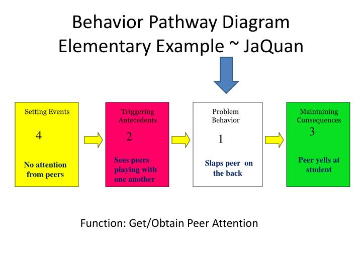Behavior Pathway Diagram