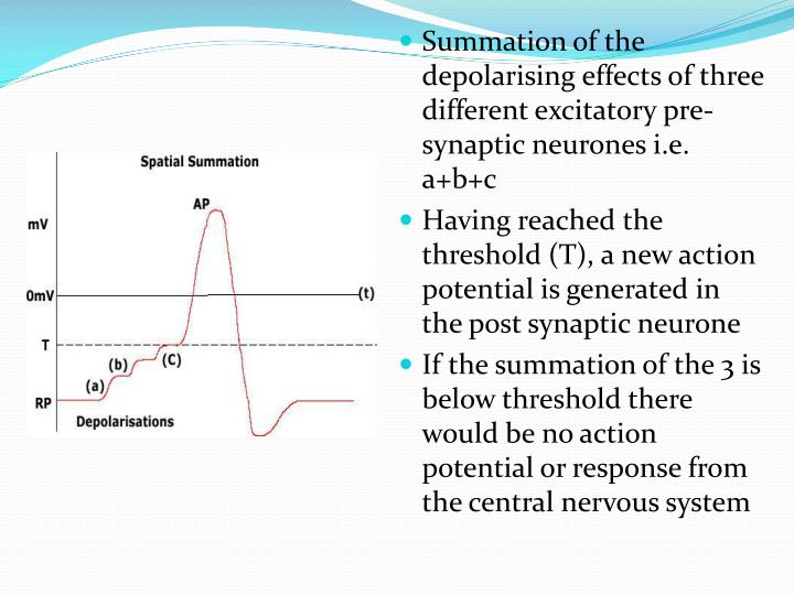 Summation of the depolarising effects of three different excitatory pre-synaptic neurones i.e.  a+b+c