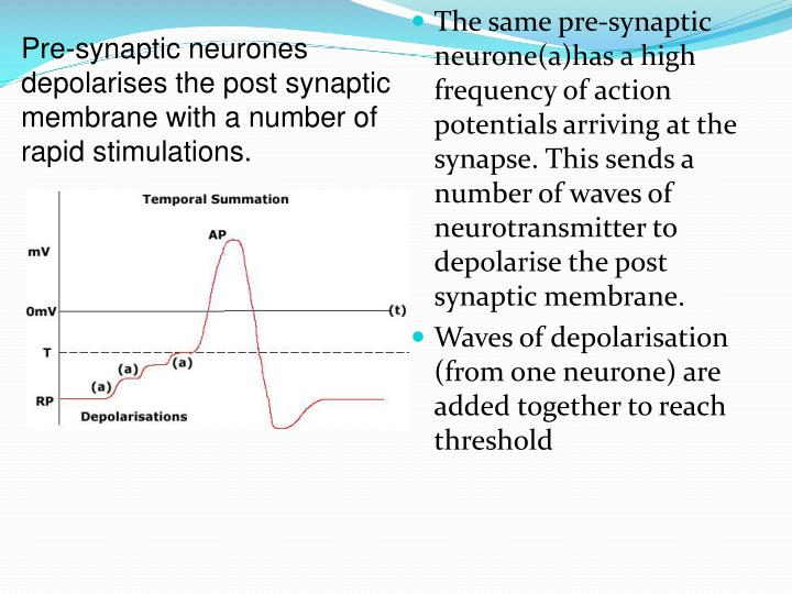 Pre-synaptic neurones depolarises the post synaptic membrane with a number of rapid stimulations.