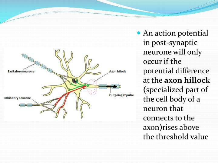 An action potential in post-synaptic neurone will only occur if the potential difference at the