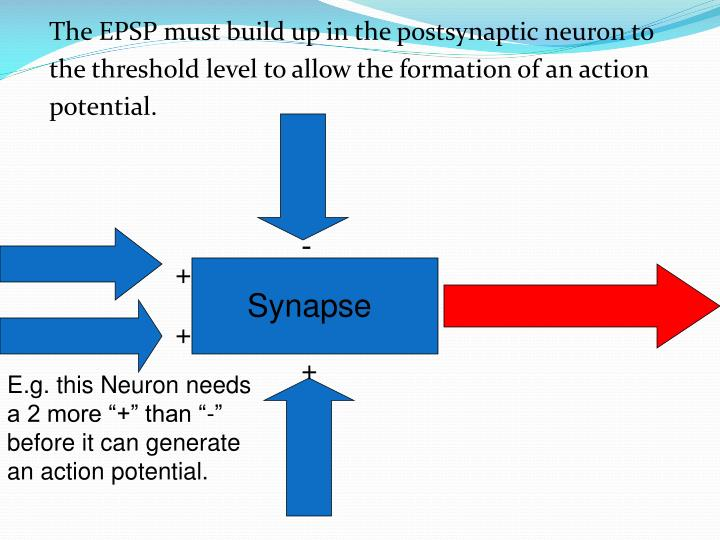 The EPSP must build up in the postsynaptic neuron to