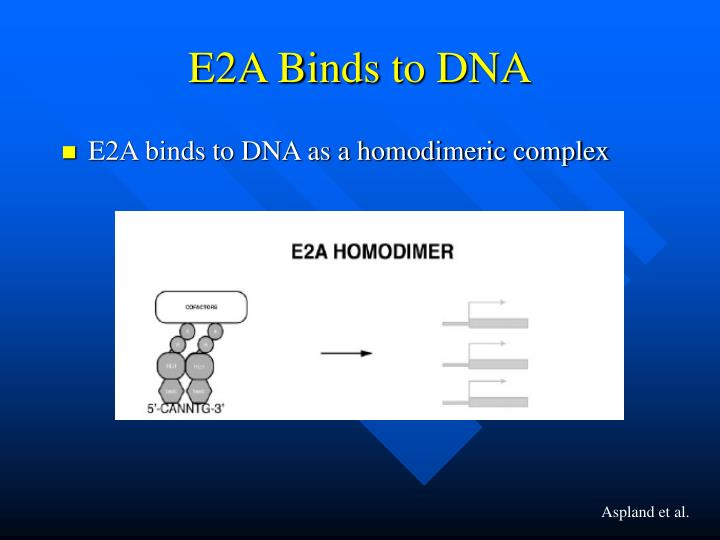 E2A Binds to DNA