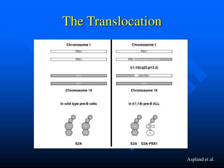 The Translocation
