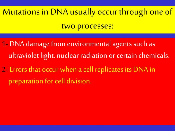 Mutations in DNA usually occur through one of two processes: