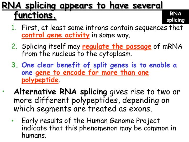 RNA splicing appears to have several           functions.