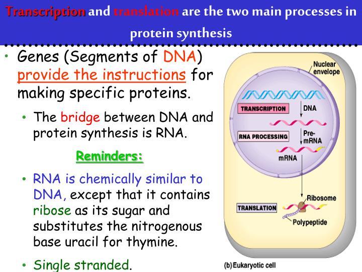 Genes (Segments of