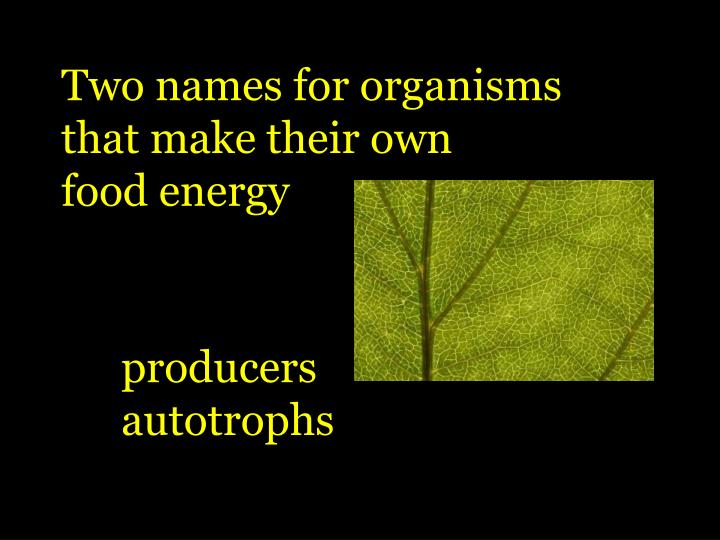 Two names for organisms