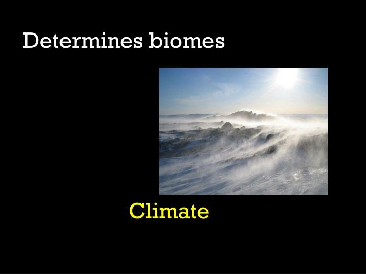 Determines biomes
