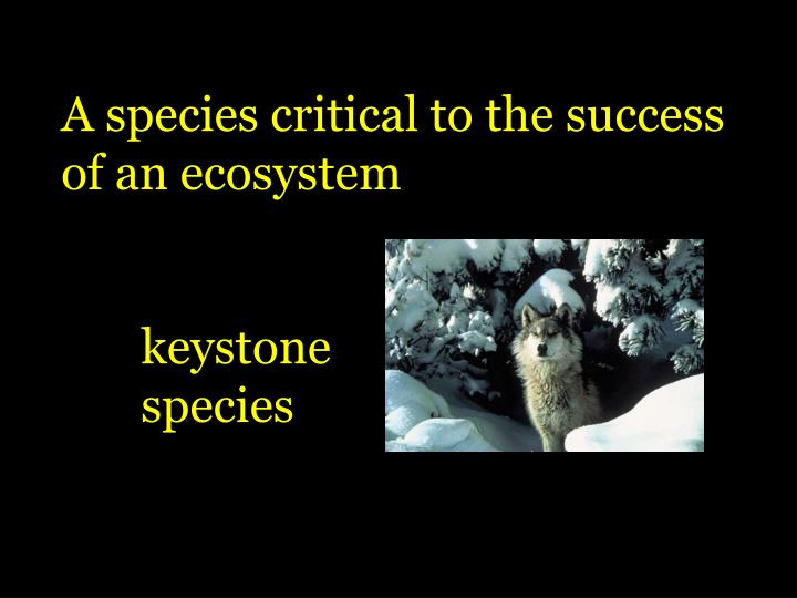 A species critical to the success