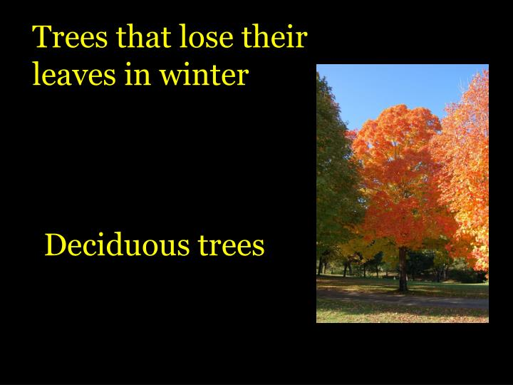 Trees that lose their