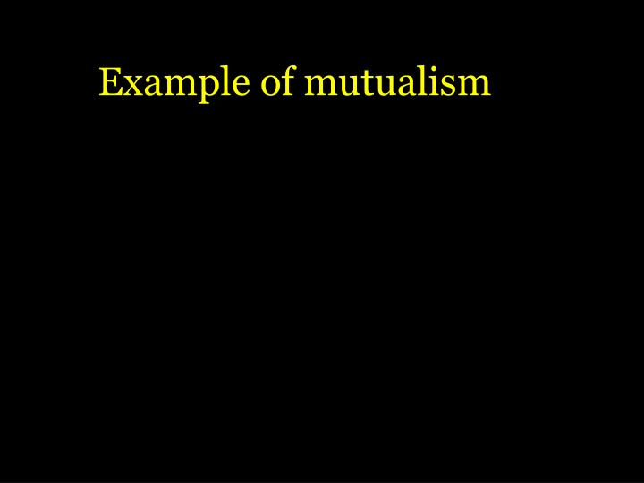 Example of mutualism