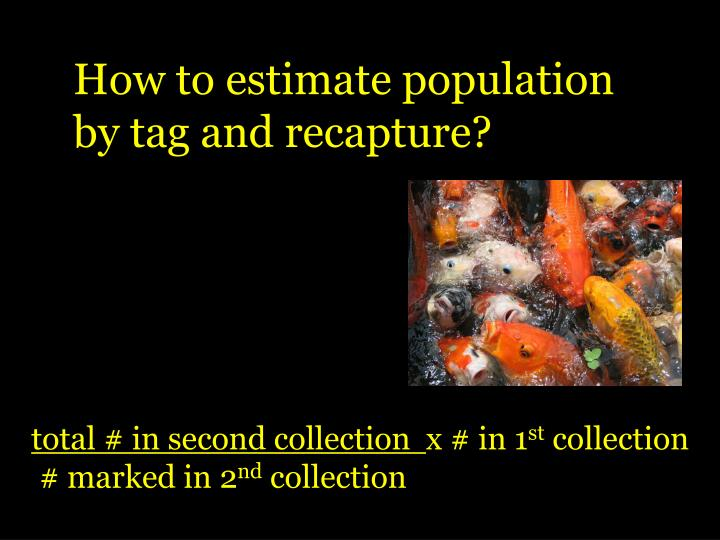How to estimate population