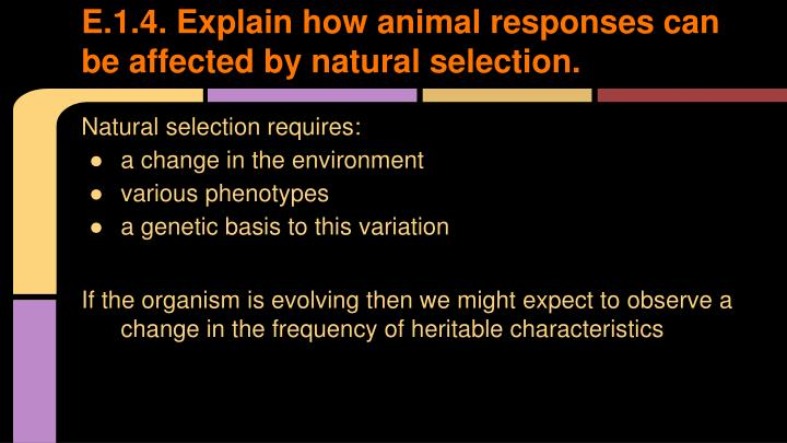 E.1.4. Explain how animal responses can be affected by natural selection.