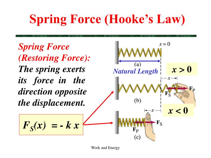 Spring Force (Hooke's Law)