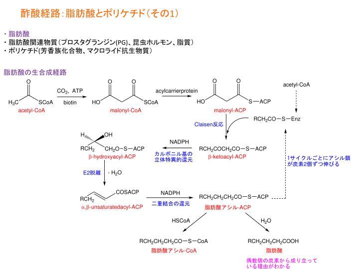 酢酸経路:脂肪酸とポリケチド(その