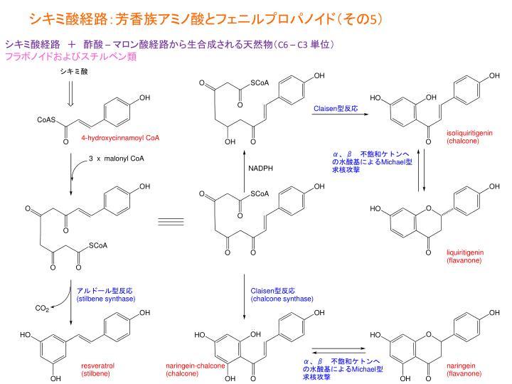 シキミ酸経路:芳香族アミノ酸とフェニルプロパノイド(その