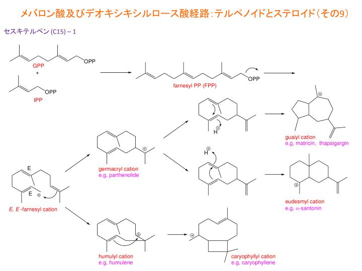 メバロン酸及びデオキシキシルロース酸経路:テルペノイドとステロイド(その