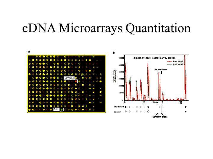 cDNA Microarrays Quantitation