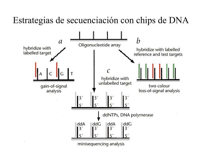 Estrategias de secuenciación con chips de DNA