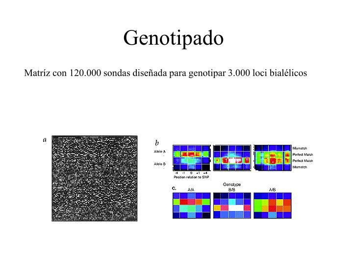 Genotipado