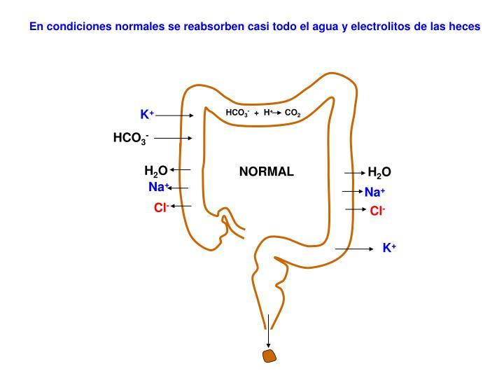 En condiciones normales se reabsorben casi todo el agua y electrolitos de las heces