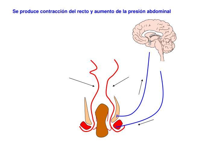Se produce contracción del recto y aumento de la presión abdominal
