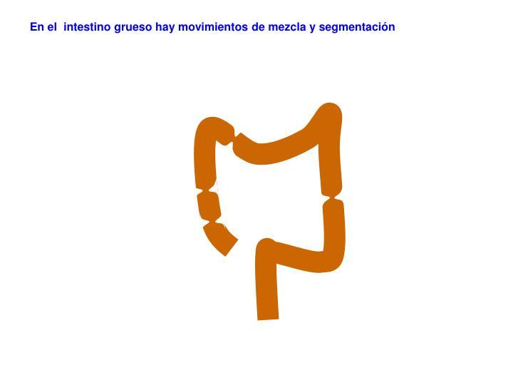 En el  intestino grueso hay movimientos de mezcla y segmentación