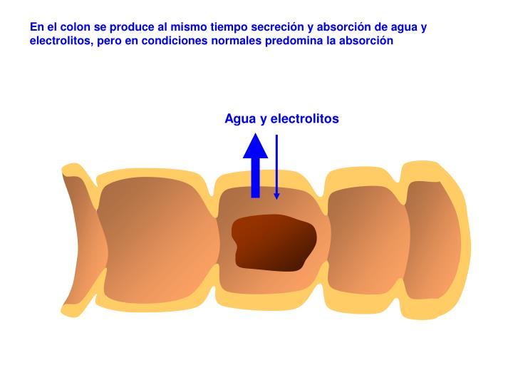 En el colon se produce al mismo tiempo secreción y absorción de agua y electrolitos, pero en condiciones normales predomina la absorción