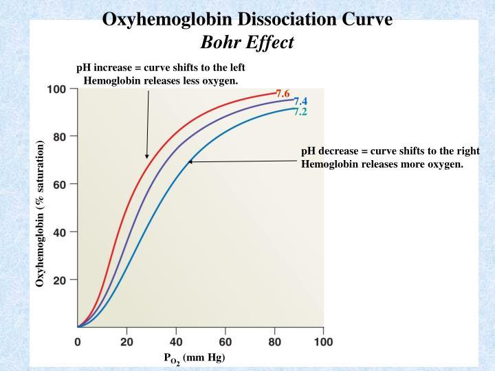 Oxyhemoglobin