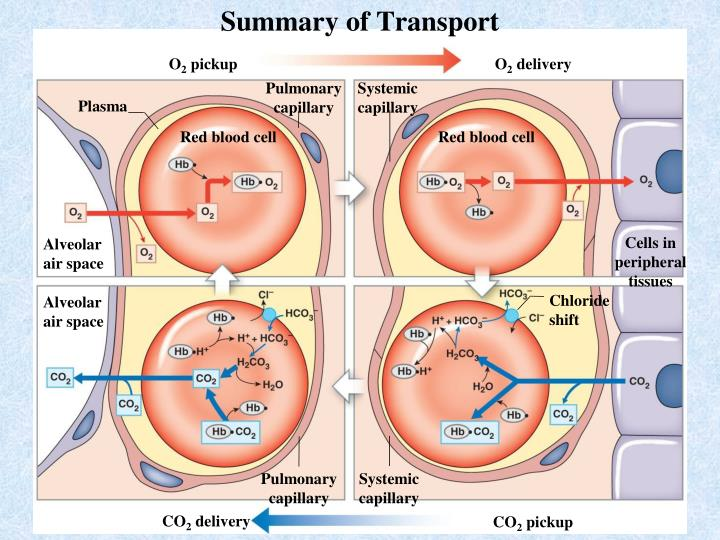 Summary of Transport