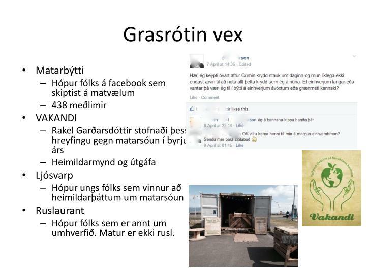 Grasrótin vex
