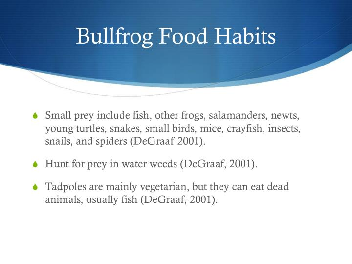 Bullfrog Food Habits