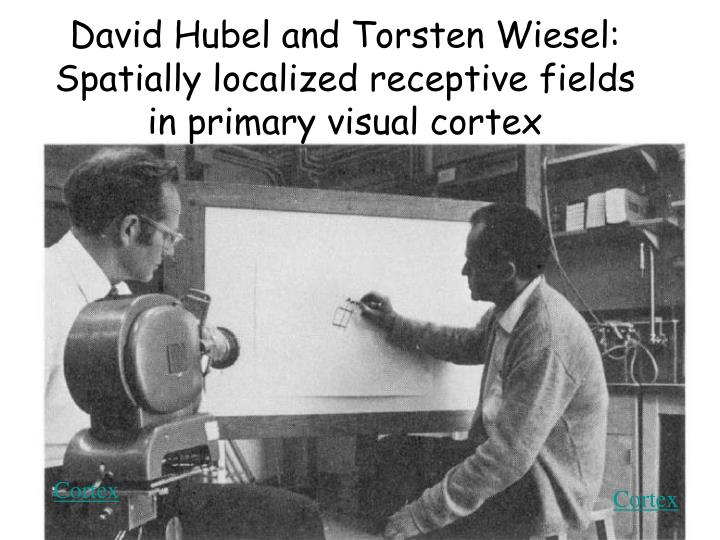 David Hubel and Torsten Wiesel: