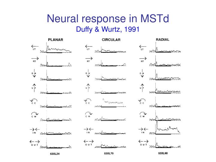 Neural response in mstd duffy wurtz 1991