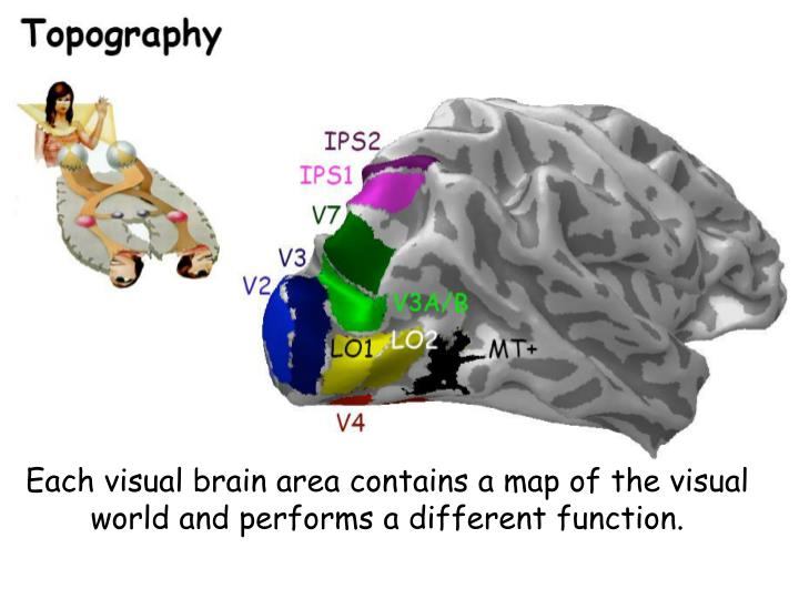 Each visual brain area contains a map of the visual world and performs a different function.