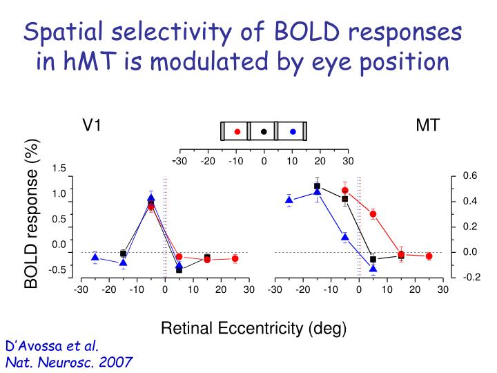 Spatial selectivity of BOLD responses in hMT is modulated by eye position