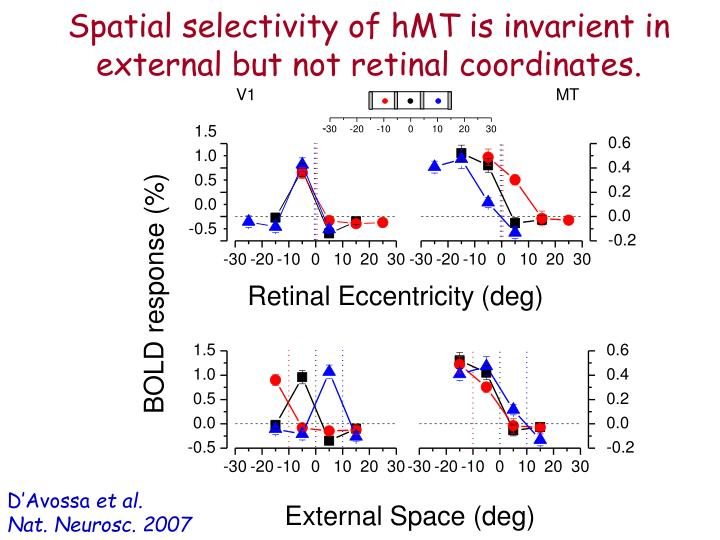 Spatial selectivity of hMT is invarient in external but not retinal coordinates.