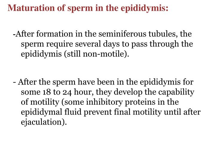 Maturation of sperm in the epididymis: