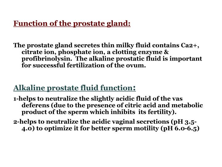 Function of the prostate gland: