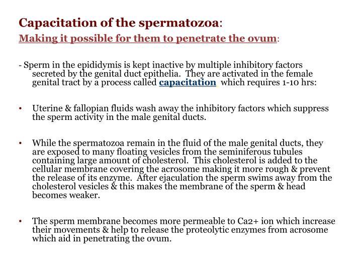 Capacitation of the spermatozoa
