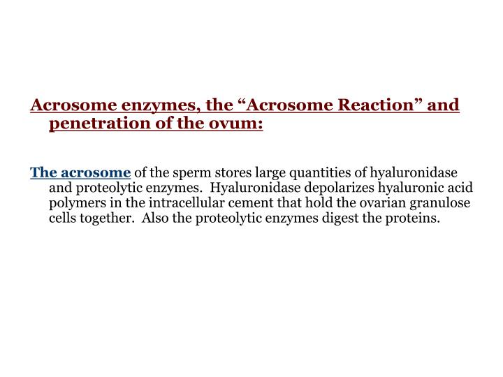 """Acrosome enzymes, the """"Acrosome Reaction"""" and penetration of the ovum:"""