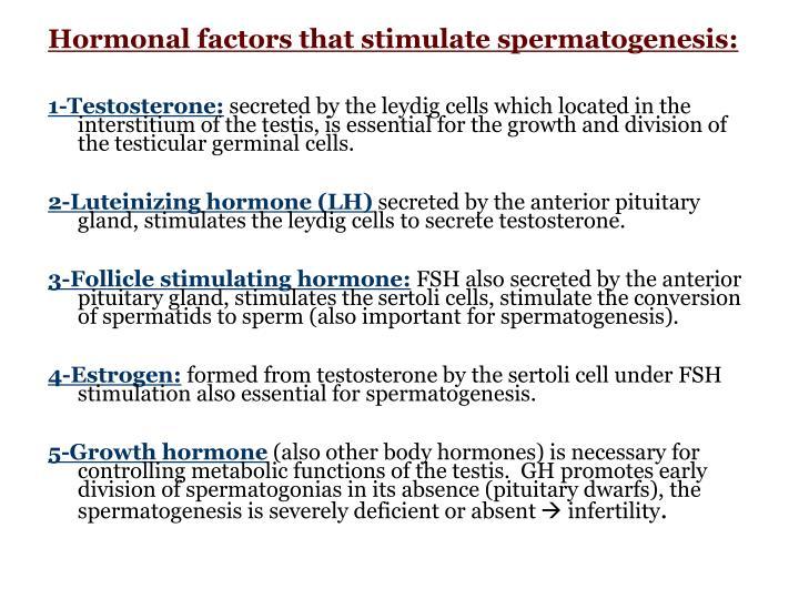 Hormonal factors that stimulate spermatogenesis: