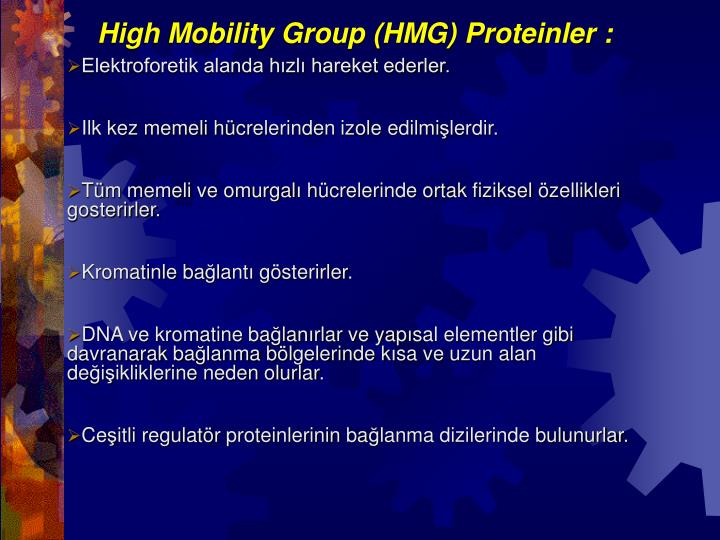 High Mobility Group (HMG) Proteinler :