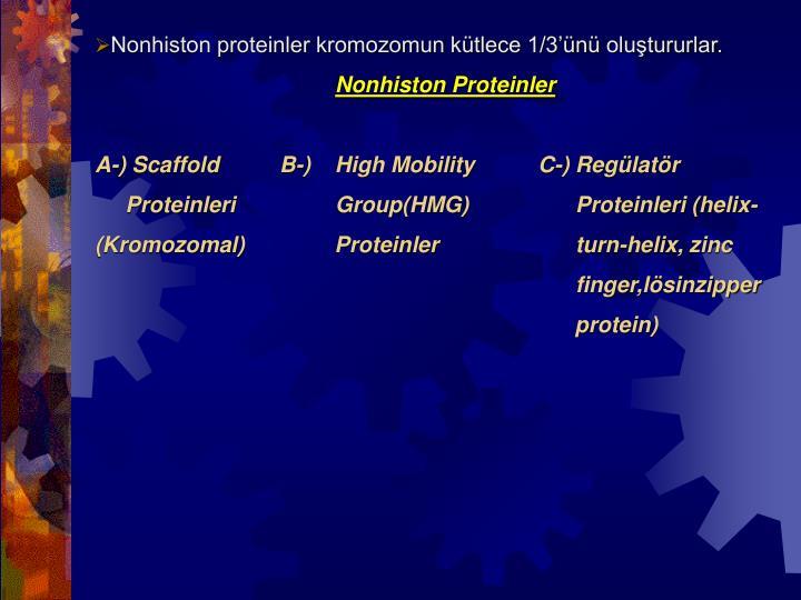 Nonhiston proteinler kromozomun kütlece 1/3'ünü oluştururlar.